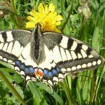Obiettivo Maremma – 12) Farfalle II