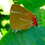 Obiettivo Maremma – 11) Farfalle I