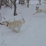 Obiettivo Maremma – 38) Cavalcata nella neve